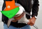 animalstuck felt fin image_manipulation this_is_stupid